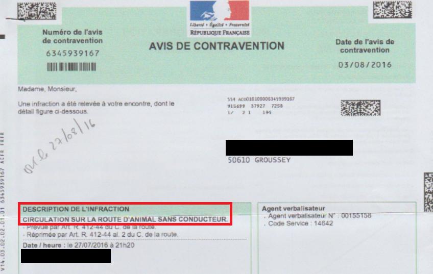 sauver_mon_permis_pv_insolite_circulation_route_animal_sans_conducteur.png