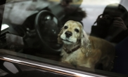 sauver_mon_permis_chien_voiture_canicule