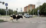 sauver_mon_permis_pv_insolite_animaux_route